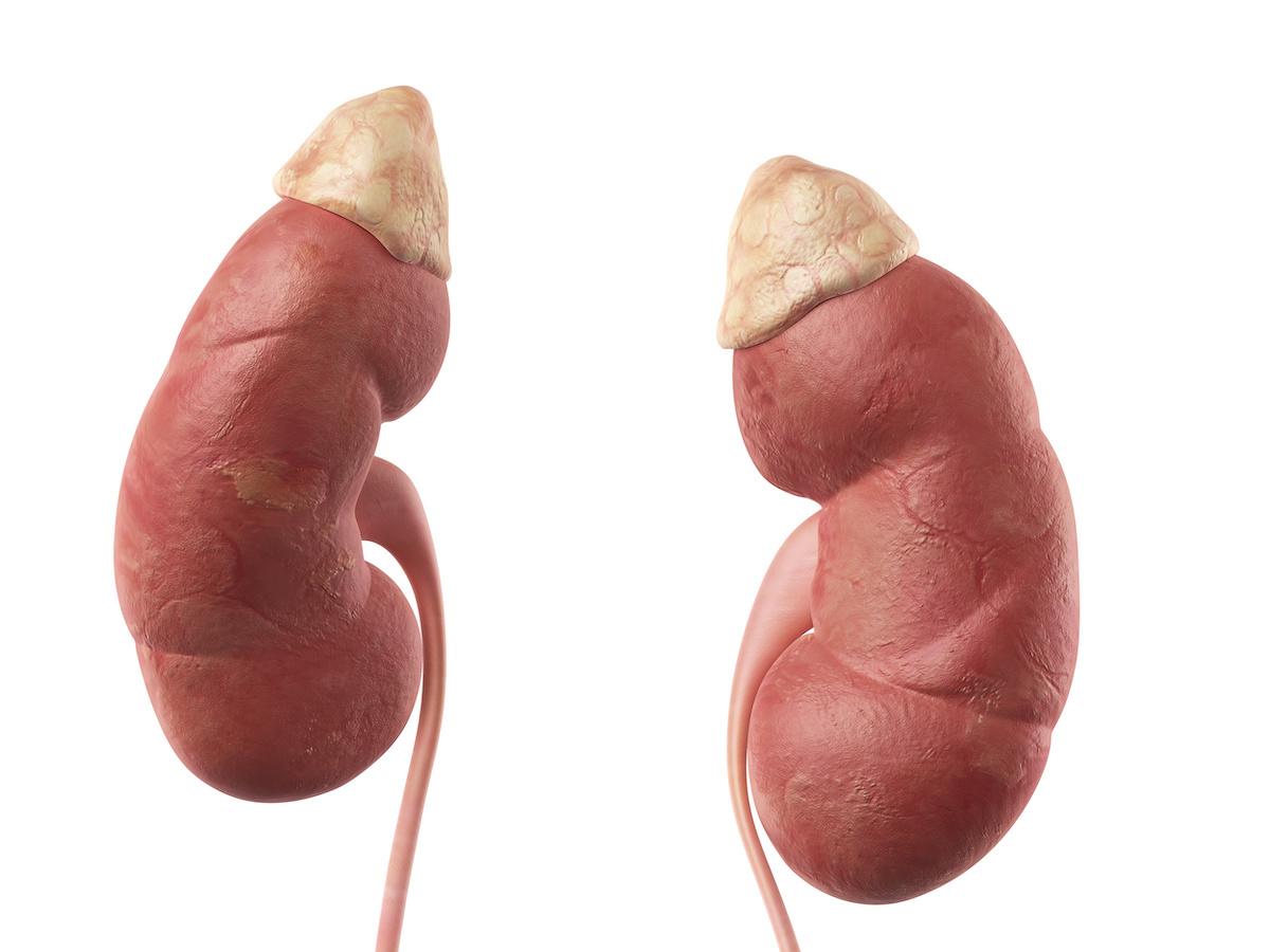 Nebennieren und Hashimoto