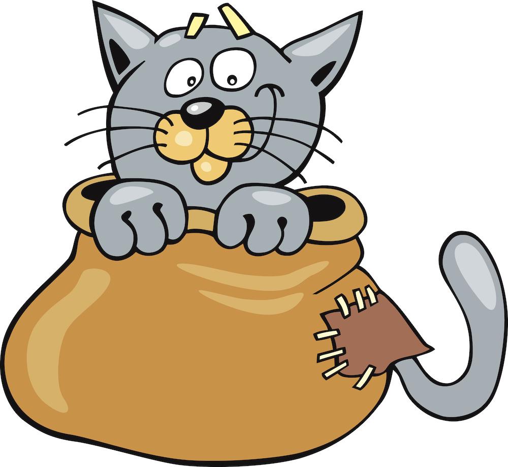 Katze-im-Sack-gesund-fuehlen-mit-hashimoto